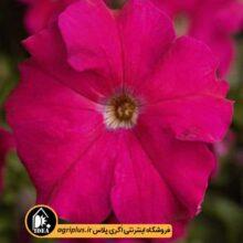 بذر اطلسی Tritunia Rose سینجنتا بسته ۱۰۰۰ تایی