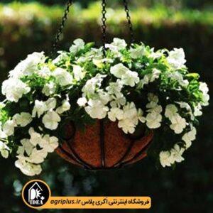 بذر پریوش آویز Mediterranean White پن امریکن