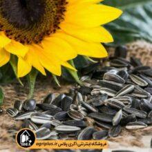 بذر آفتابگردان خوراکی ۶۰۹ OP بسته ۵۰ گرمی