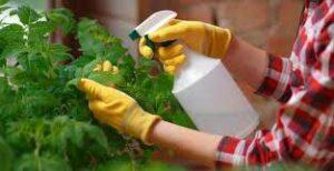 پودر مبارزه با قارچ های گیاهی