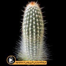 بذر Espostoa Mirabilis Var. Primigena بسته ۱۰۰۰۰
