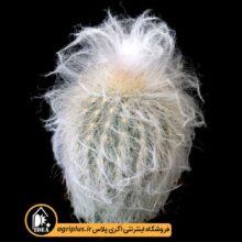 بذر Espostoa Ruficeps X Densispina Alba بسته ۱۰۰۰۰