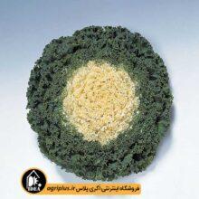 بذر کلم زینتی فر Kamome White تاکی بسته ۲۰۰۰ تایی