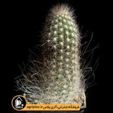 بذر Trixanthocereus Blosfeldiorum بسته ۱۰۰۰۰ تایی