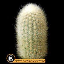 بذر Weberbauerocereus Rauhii بسته ۱۰۰۰۰ تایی
