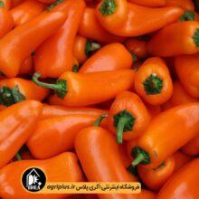 بذر فلفل گلخانه ای مخروطی نارنجی POP هلند ۱۰۰ تایی