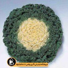 بذر کلم زینتی فر Kamome White تاکی بسته ۱۰۰۰ تایی