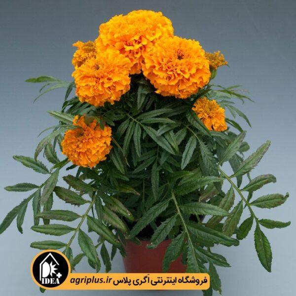 بذر_جعفری_بینری_Discovry-orange