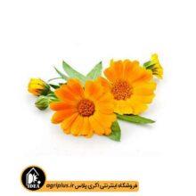 بذر گل همیشه بهار بسته بندی خانگی