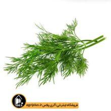 بذر سبزی شوید بسته بندی خانگی