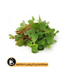 بذر سبزی خرفه بسته بندی خانگی
