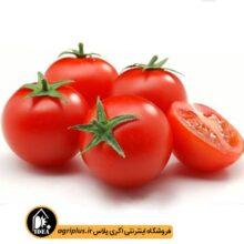 بذر گوجه فرنگی بسته بندی خانگی