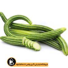 بذر خیار چنبر بسته بندی خانگی
