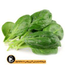 بذر سبزی اسفناج بسته بندی خانگی