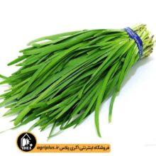 بذر سبزی تره بسته بندی خانگی کارتن ۲۵ عددی