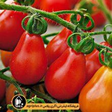 بذر گوجه چری قرمز گلابی PAPRIKA بسته ۱۰۰ تایی