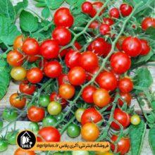 بذر گوجه چری گیلاسی مخلوط PAPRIKA بسته ۱۰۰ تایی