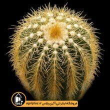 بذر Eriocactus Claviceps بسته ۵۰۰۰ تایی