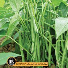 بذر لوبیا سبز سان ری ۴۸۰۴ OP بسته ۵۰ گرمی