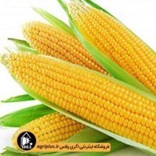 بذر ذرت شیری ساری ۸۰۲ OP بسته ۵۰ گرمی