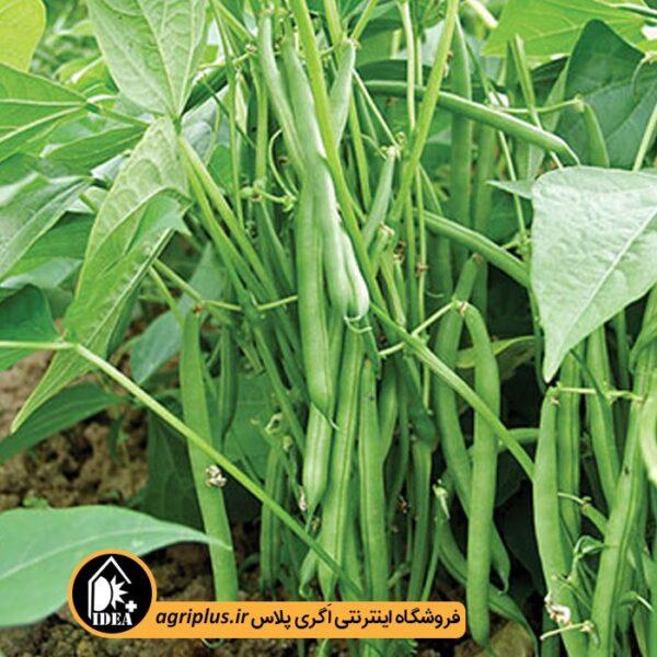 بذر-لوبیا-سبز-سان-ری-پاسارگاد-OP