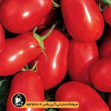 بذر گوجه فرنگی ارلی اوربانا وای ۴۷۰۱ OP